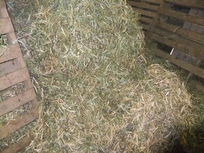 Le foin d herbe